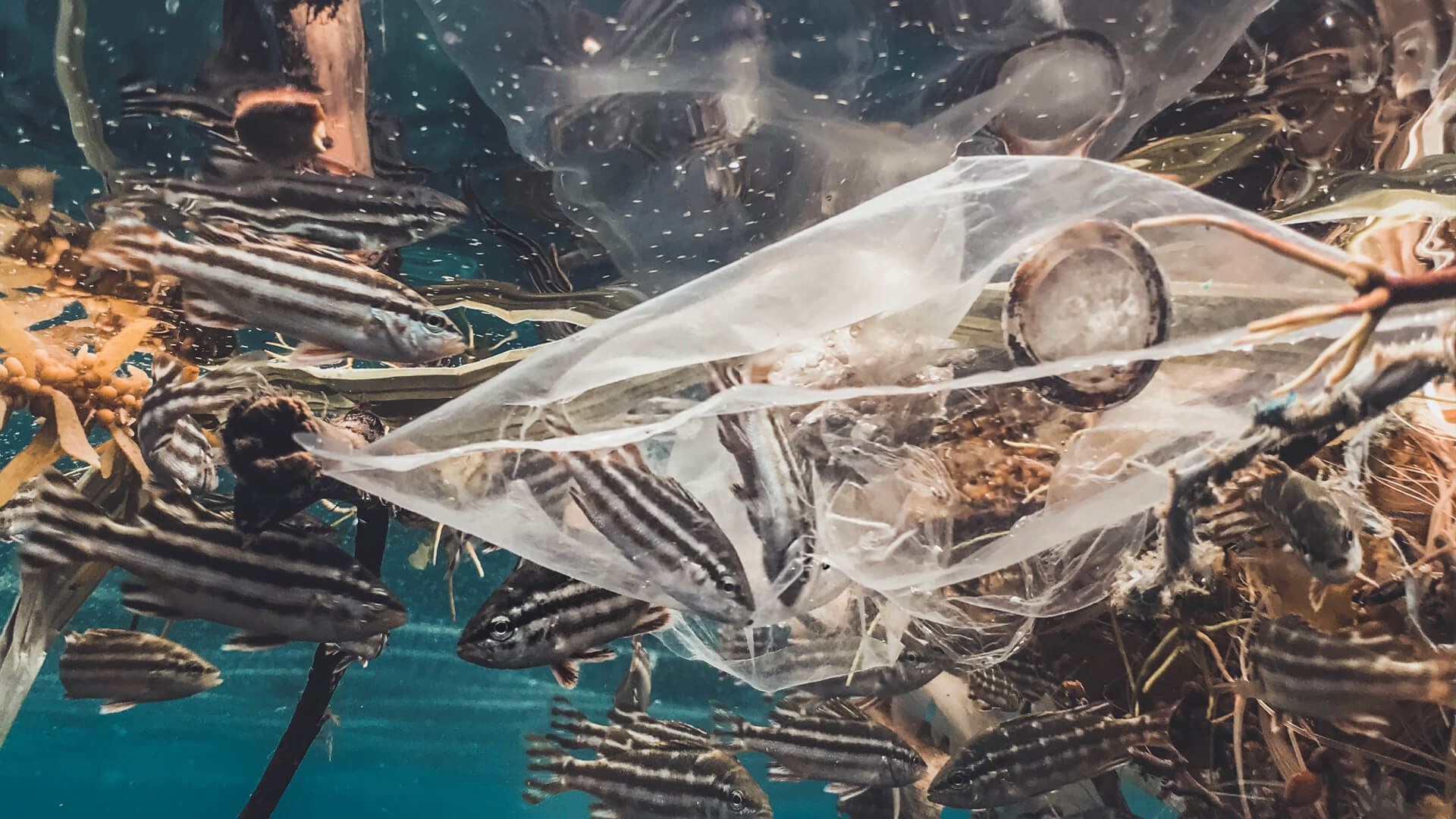 Peixes no mar junto a plásticos